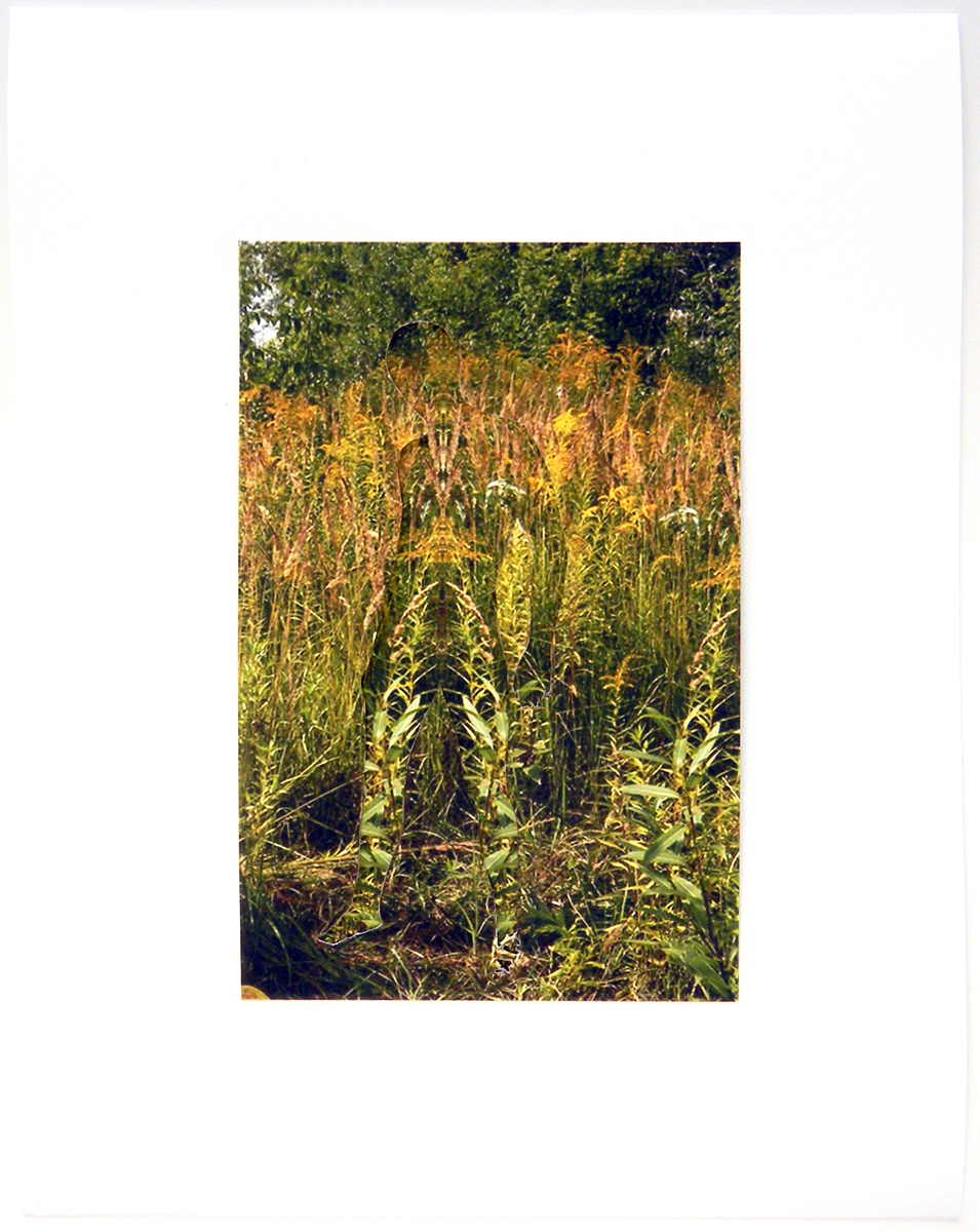 "Golden Rod Cut Archival Inkjet Print 8.5"" x 10.5"" 2011"